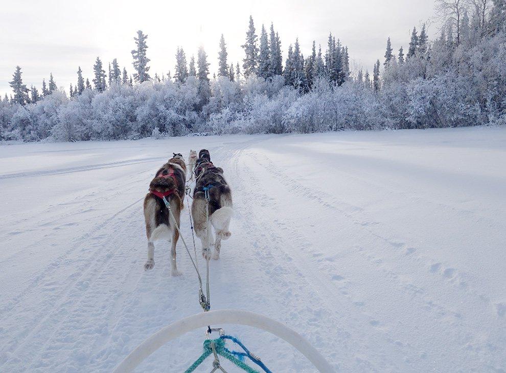 Ayumi_Horie_dog_sledding_Fort-Yukon
