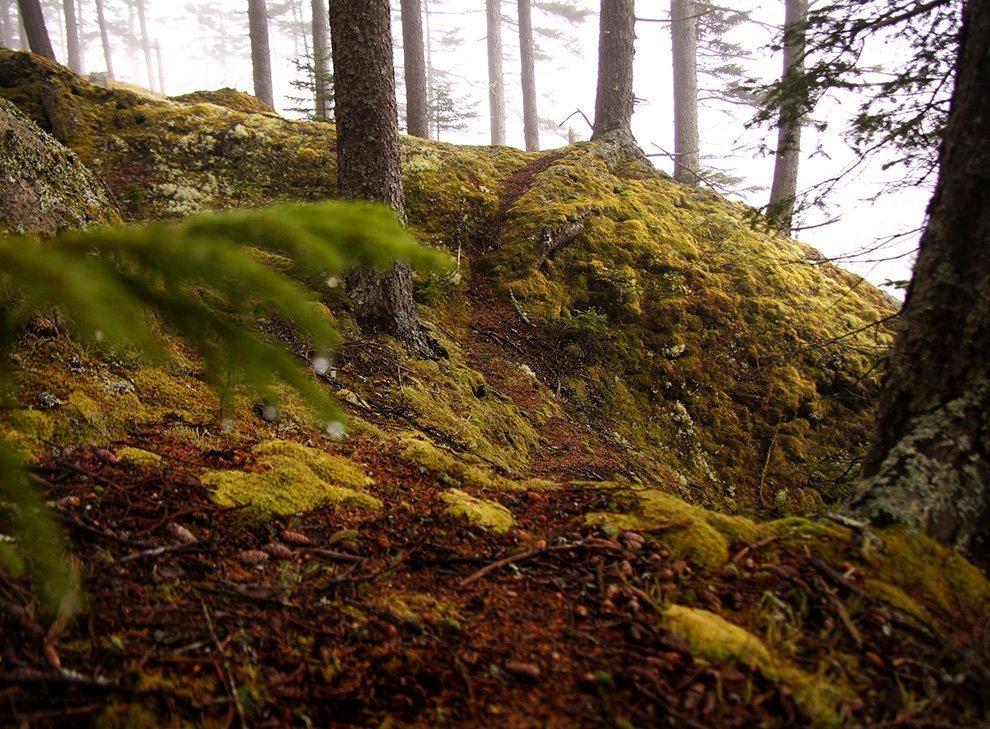 haystack-moss