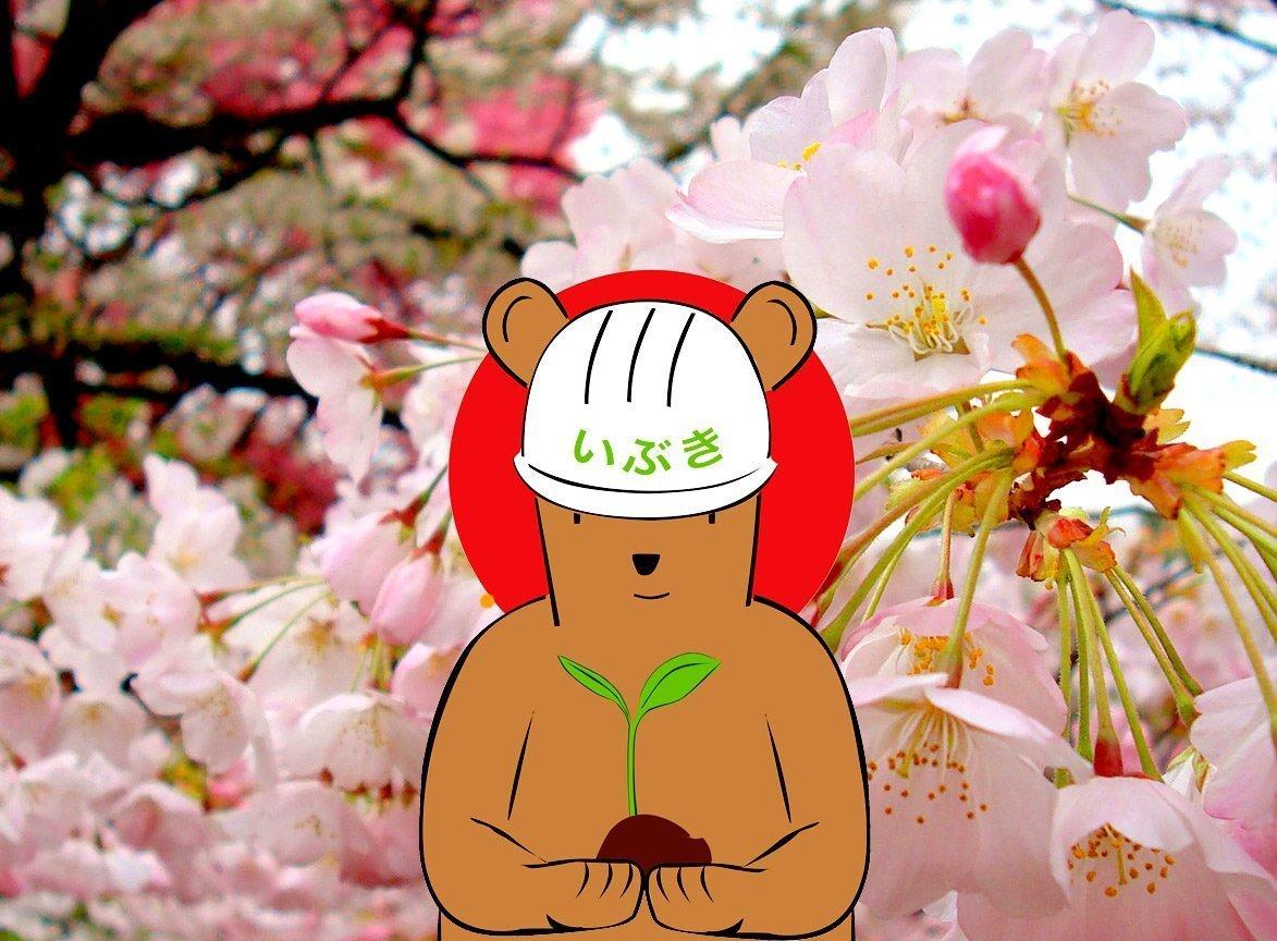 ibuki-and-cherry-blossoms